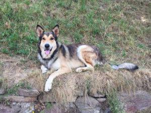 Hund Passeiertal
